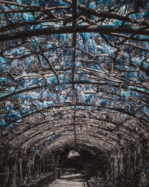 Kostenloses Stock Foto zu blau, lila, schwarz, tiefenschärfe