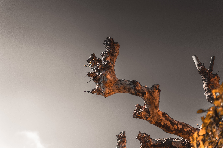 Δωρεάν στοκ φωτογραφιών με γκρι, δέντρο, καθαρός ουρανός, κλαδί