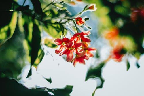 Photos gratuites de branche, brillant, brouiller, concentrer