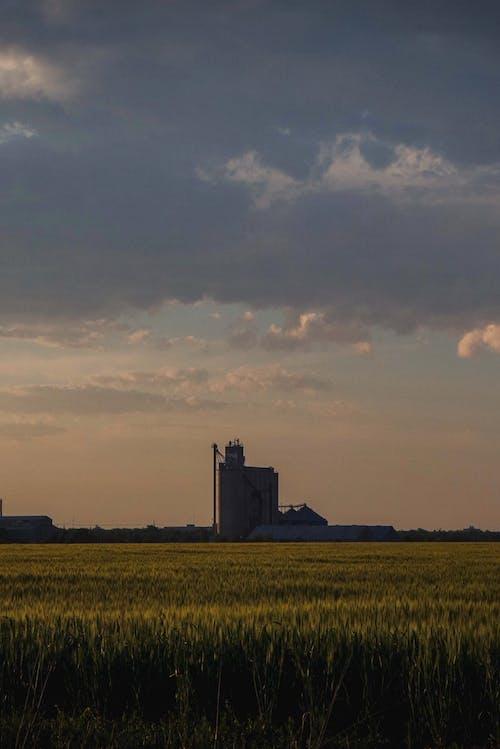 Безкоштовне стокове фото на тему «вродлива, пасовище, Техас, трав'яне поле»