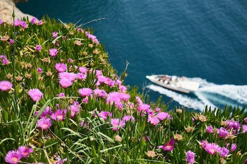 Darmowe zdjęcie z galerii z dzień, fioletowy, flora, kolor