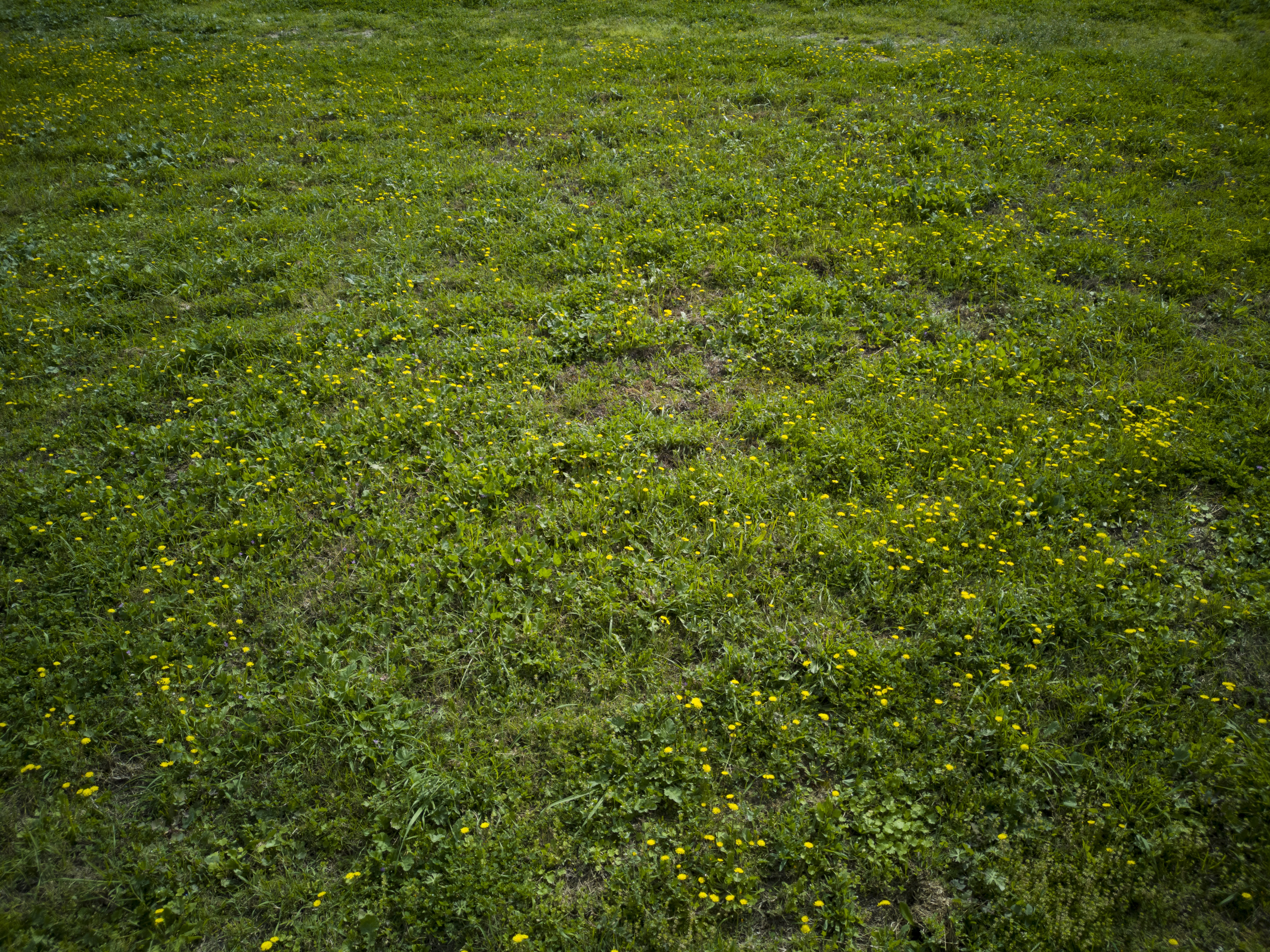 Free stock photo of background, close up, environment, grass