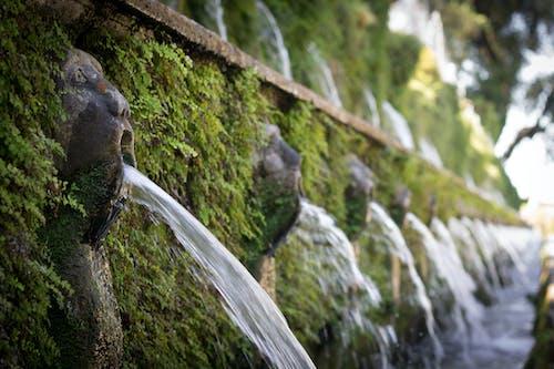 Fotos de stock gratuitas de agua, Arte, belleza natural, césped