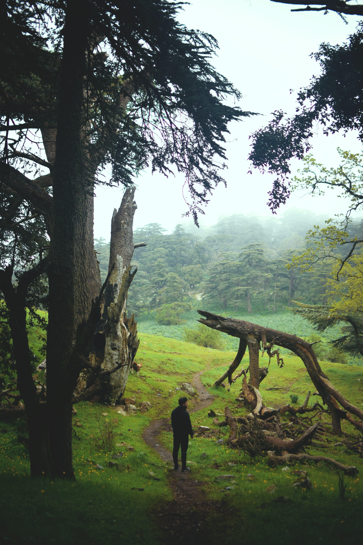 35 mm, doğa yürüyüşü, fotoğrafçılık, hikingculture içeren Ücretsiz stok fotoğraf