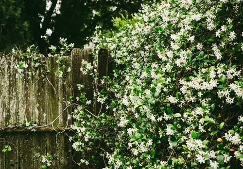 White Petaled Flowers on Wall