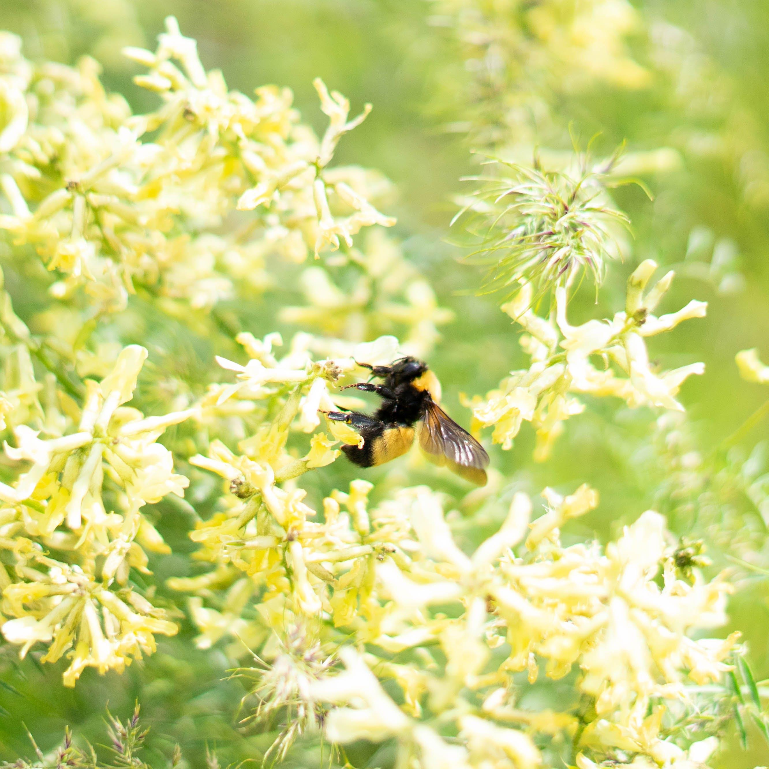 Foto d'estoc gratuïta de abellot, flors, molla