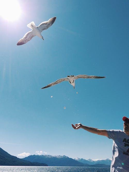 Darmowe zdjęcie z galerii z akcja, błękitne niebo, czas wolny, góra