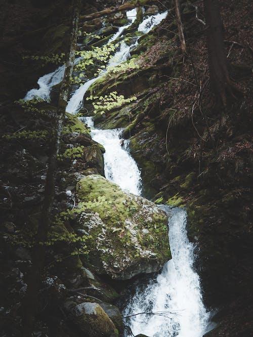 Ảnh lưu trữ miễn phí về alps, cây, con sông, cục đá