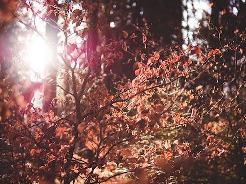 Darmowe zdjęcie z galerii z blask słońca, bokeh, bujny, drzewo