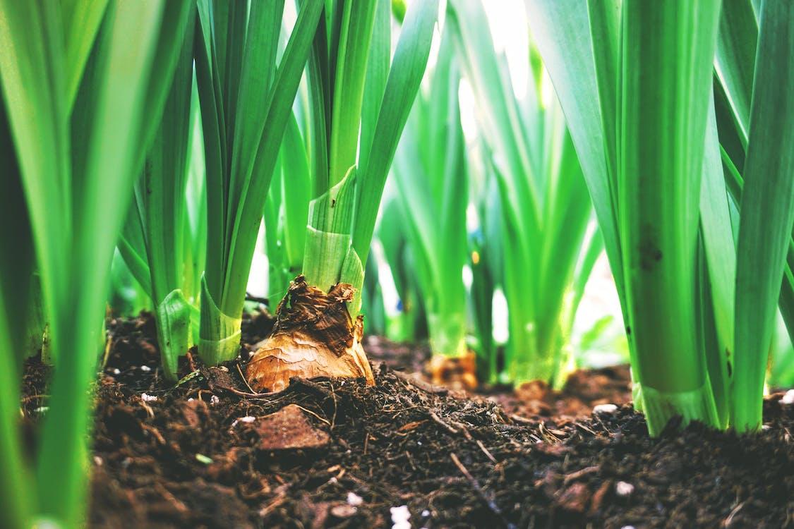 hortaliza creciendo en la tierra