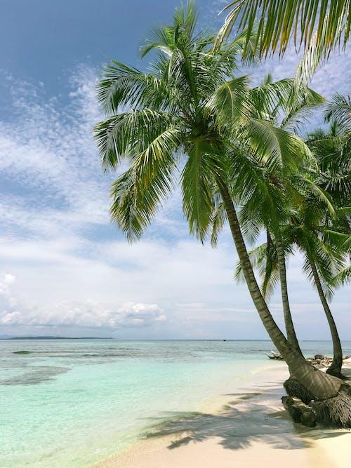 Darmowe zdjęcie z galerii z drzewo palmowe, lato, palma, plaża