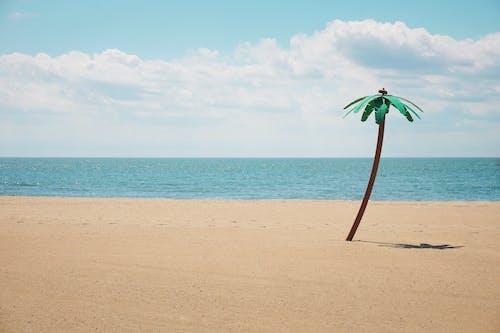 Fotobanka sbezplatnými fotkami na tému dlaň, modrá obloha, pláž, slnko