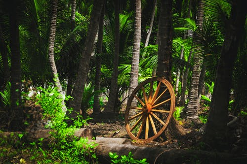 Free stock photo of abandoned, big wheel, forest, green