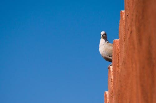 Free stock photo of animal, architecture, beautiful, bird