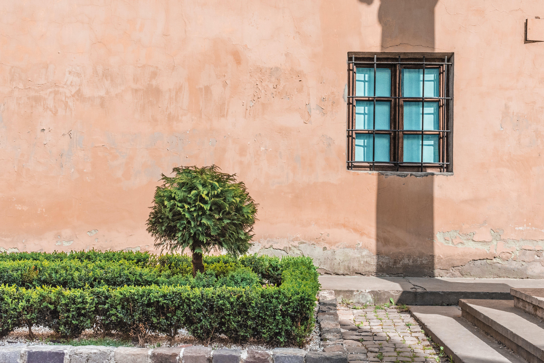 ağaç, duvar, mavi pencere içeren Ücretsiz stok fotoğraf