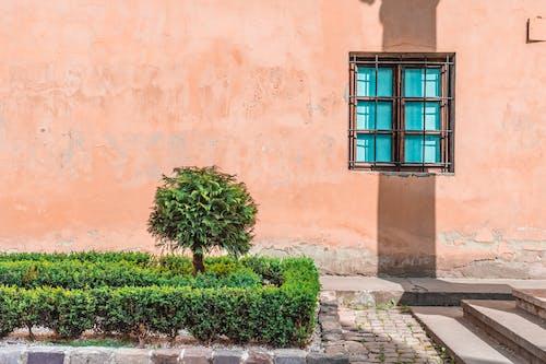 Základová fotografie zdarma na téma modré okno, strom, zeď