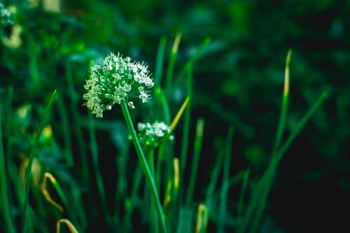 Gratis stockfoto met #natuur, bloem, groen veld