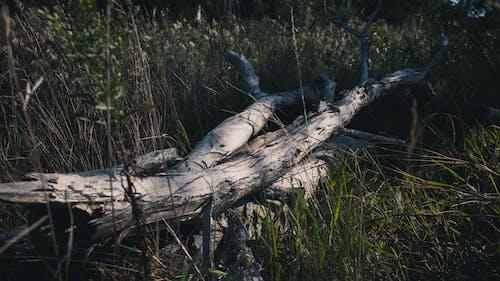 Základová fotografie zdarma na téma denní, denní světlo, mrtvý strom, odstín