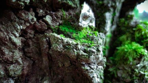 Бесплатное стоковое фото с #природа, максросъемка, природа