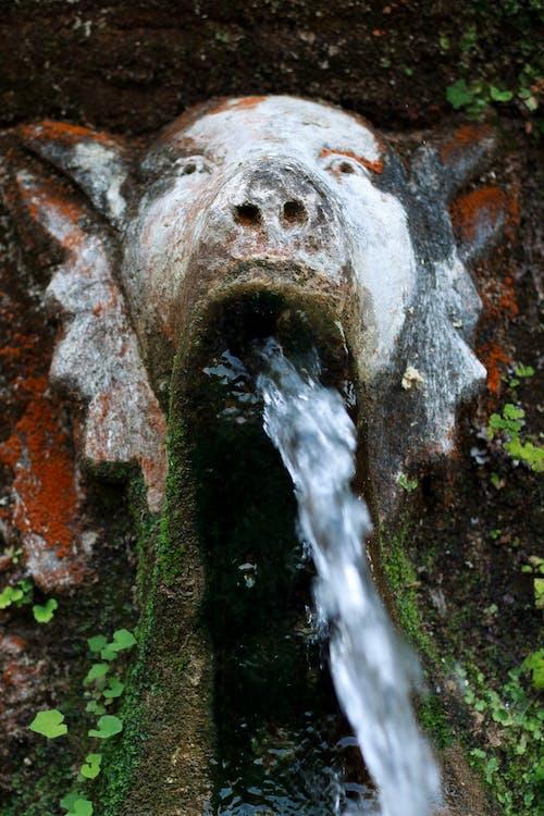 Fotos de stock gratuitas de agua, belleza en la naturaleza, belleza natural, color verde