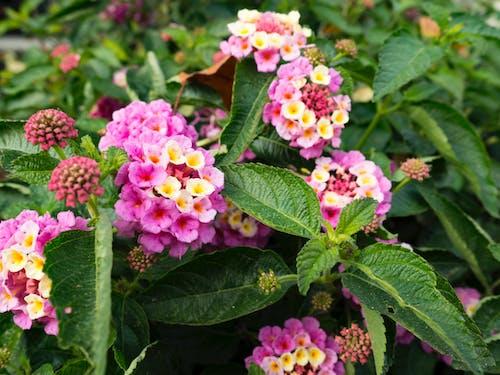 Immagine gratuita di colore, fiori, giallo, petali