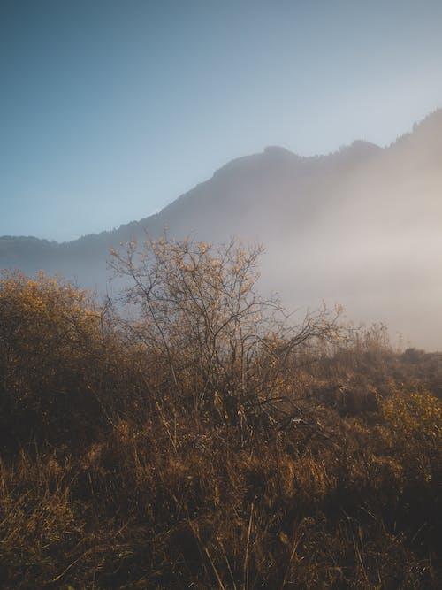 Ảnh lưu trữ miễn phí về núi, sương mù