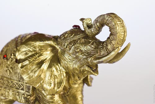 Gratis lagerfoto af elefant