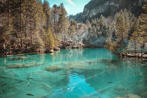 Kostenloses Stock Foto zu bäume, berg, blau, blaues wasser