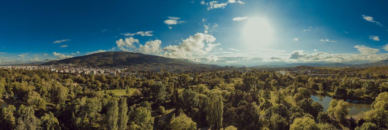 arbres, arrière-plan bleu, astrophotographie