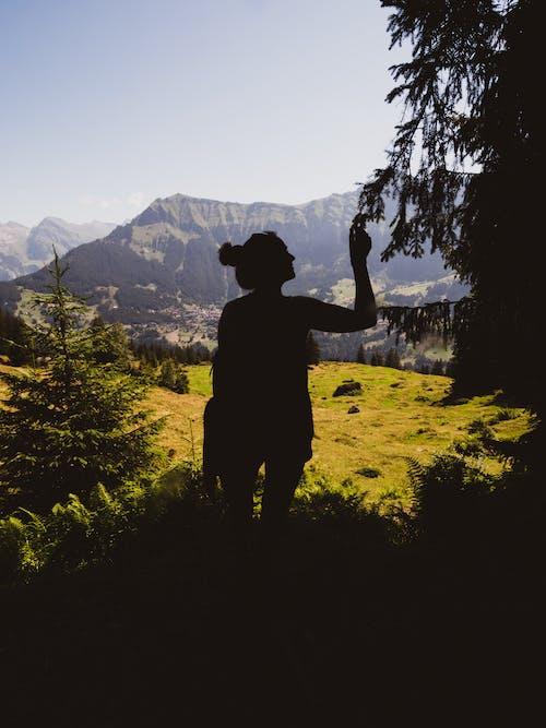 Imagine de stoc gratuită din arbori, cer, cer albastru, contur