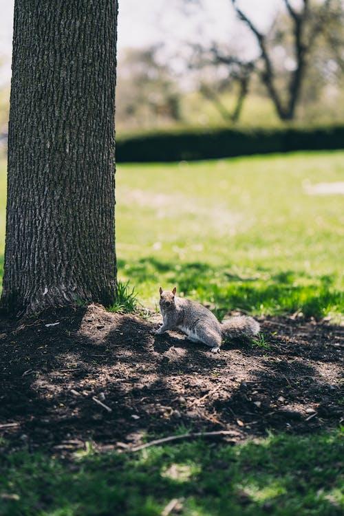 リス, 動物, 動物の写真