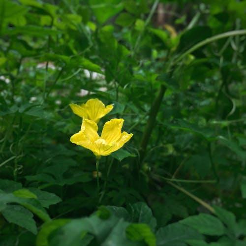 Foto d'estoc gratuïta de #yellow