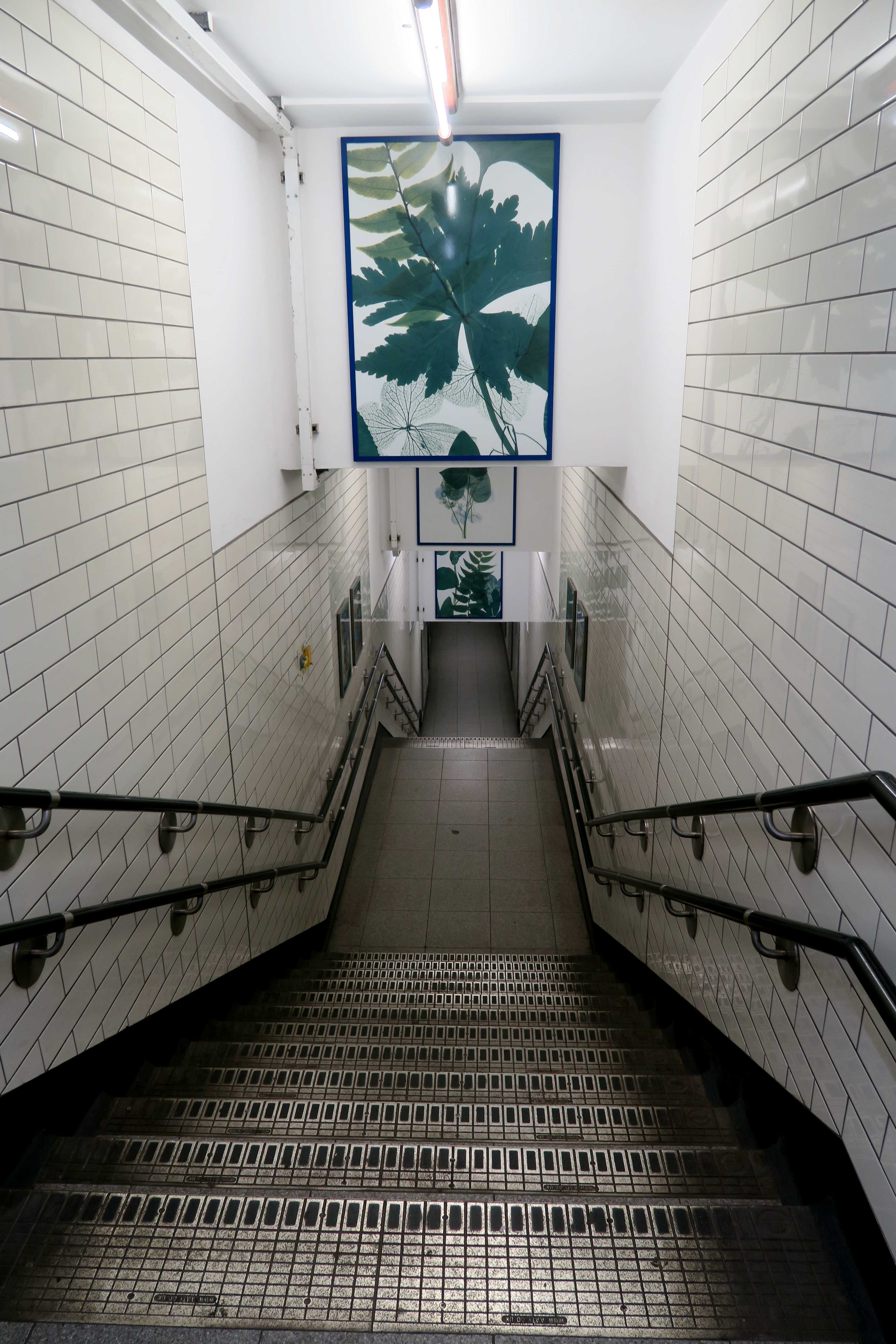Free stock photo of stairs, stairway, station
