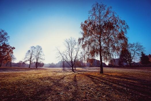 Kostenloses Stock Foto zu landschaft, natur, bäume, silhouette