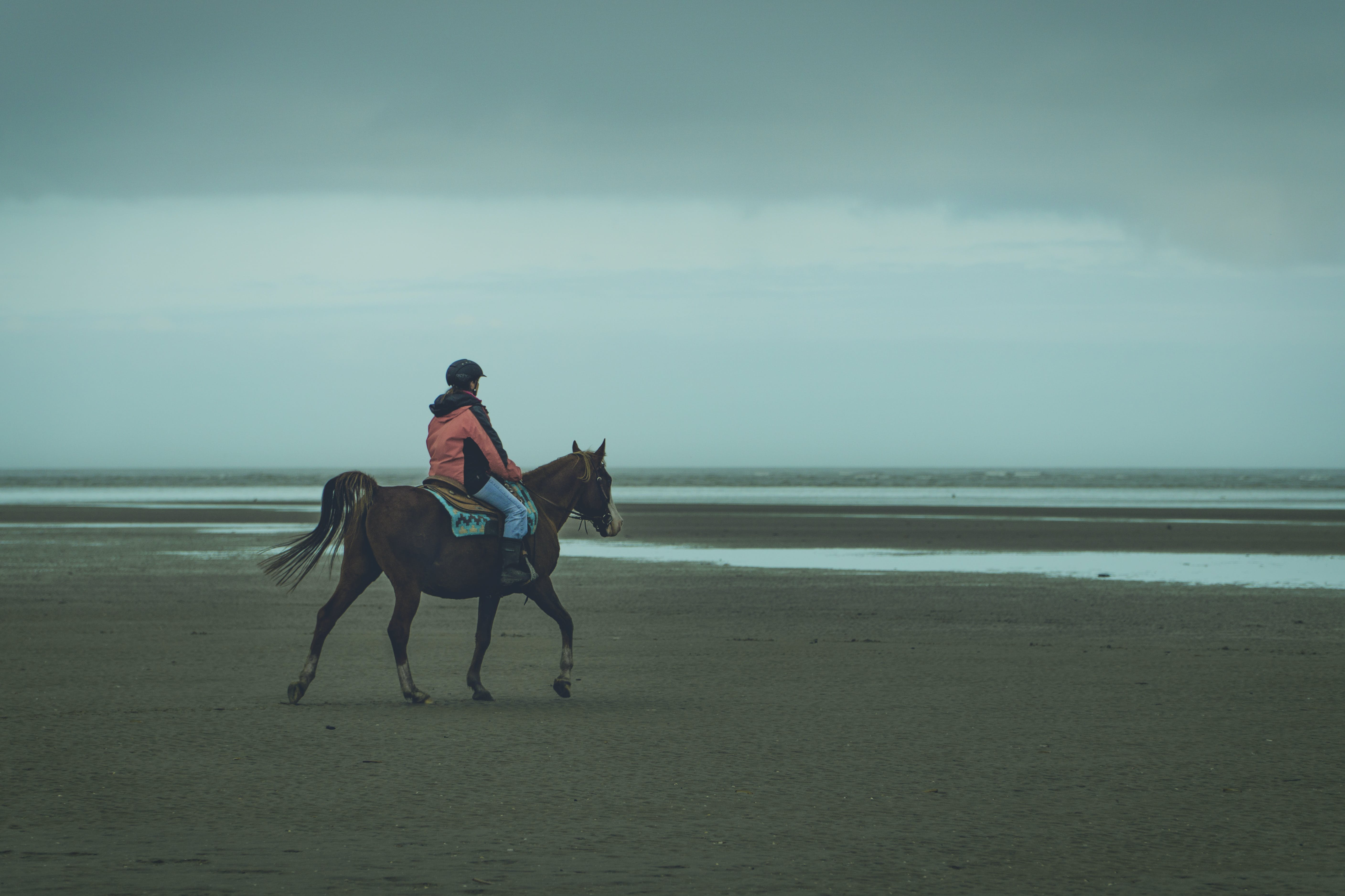 Foto profissional grátis de adestramento, animal, beira mar, carona