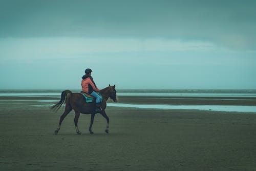 Imagine de stoc gratuită din acoperit de nori, animal, cal, călărie