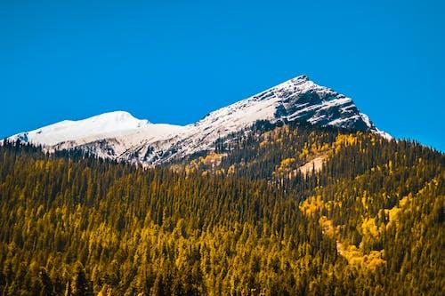 Imagine de stoc gratuită din #natură, albastru, arbore, aventură