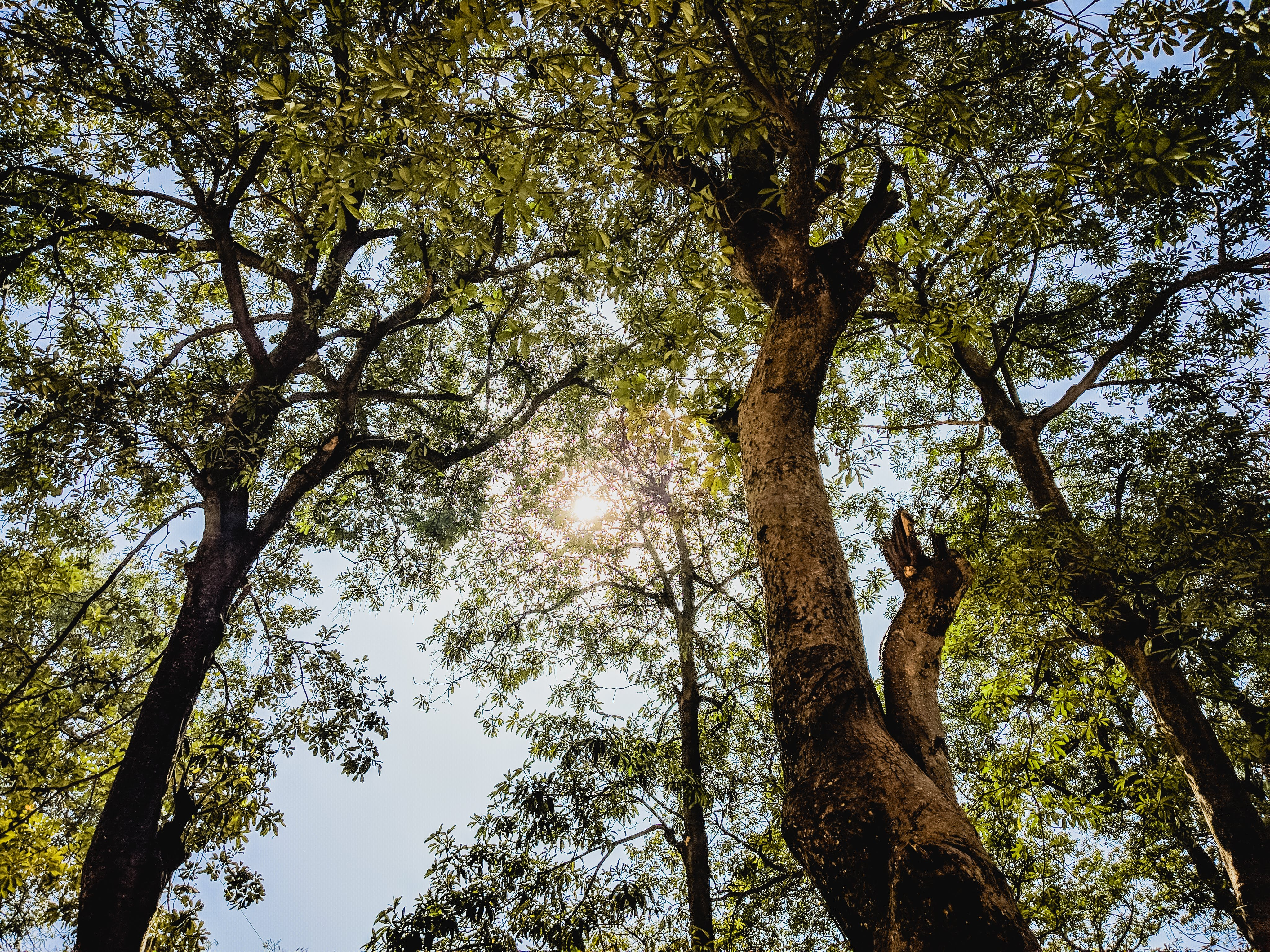 Free stock photo of background, greenery, sunny, trees