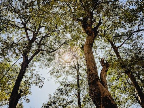 나무, 녹지, 배경, 화창한의 무료 스톡 사진