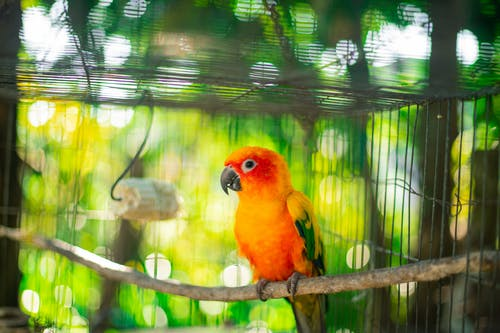 Selective Focus Photo of a Caged Orange and Yellow Baby Parrot Perched on Branch