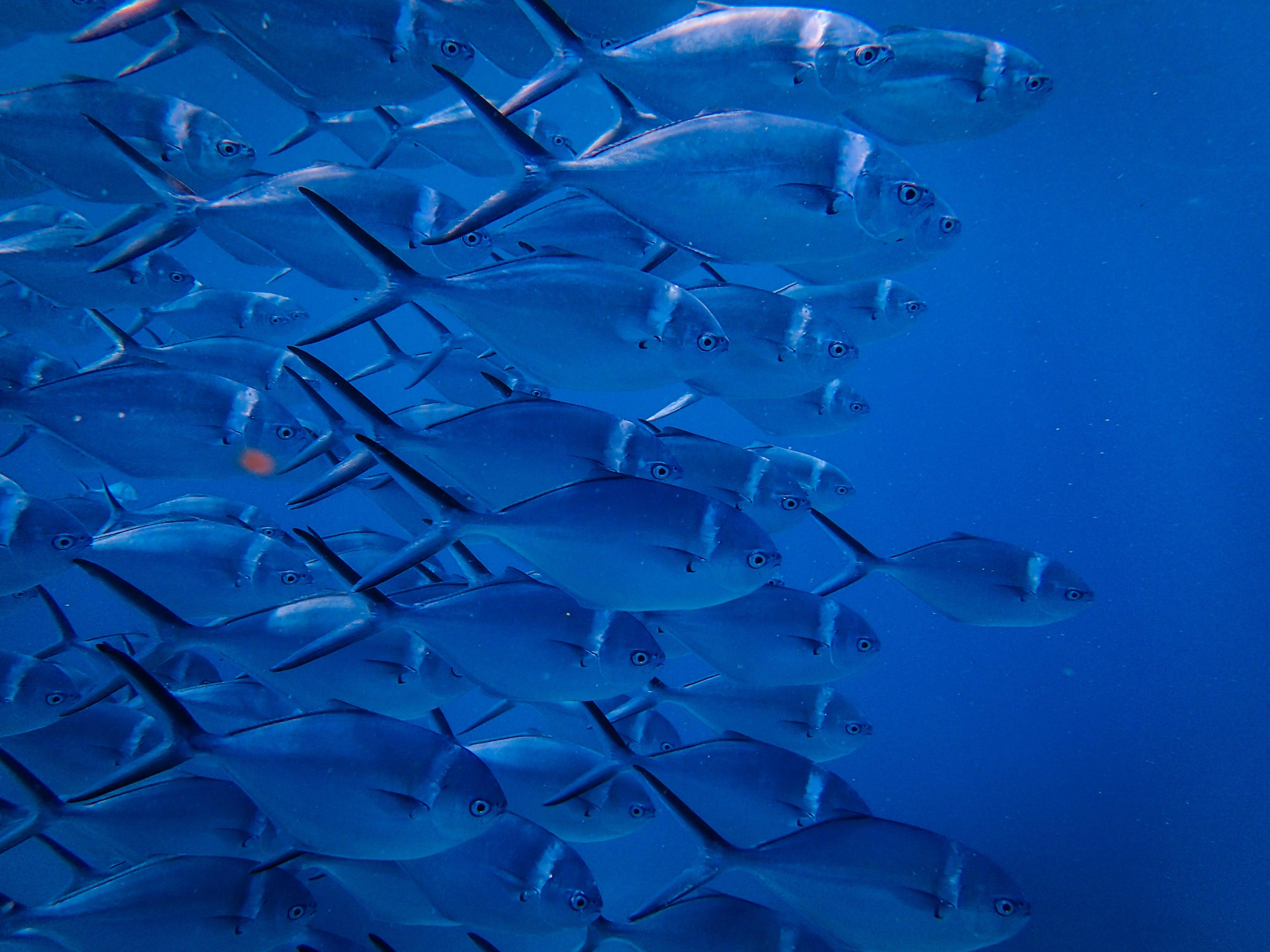 Základová fotografie zdarma na téma divočina, hejno ryb, moře, oceán