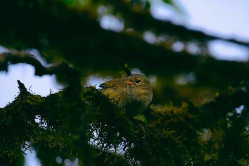 ağaç, hayvan, küçük, kuş içeren Ücretsiz stok fotoğraf