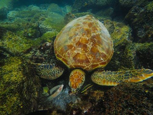 Foto stok gratis air, binatang, binatang air, di bawah air