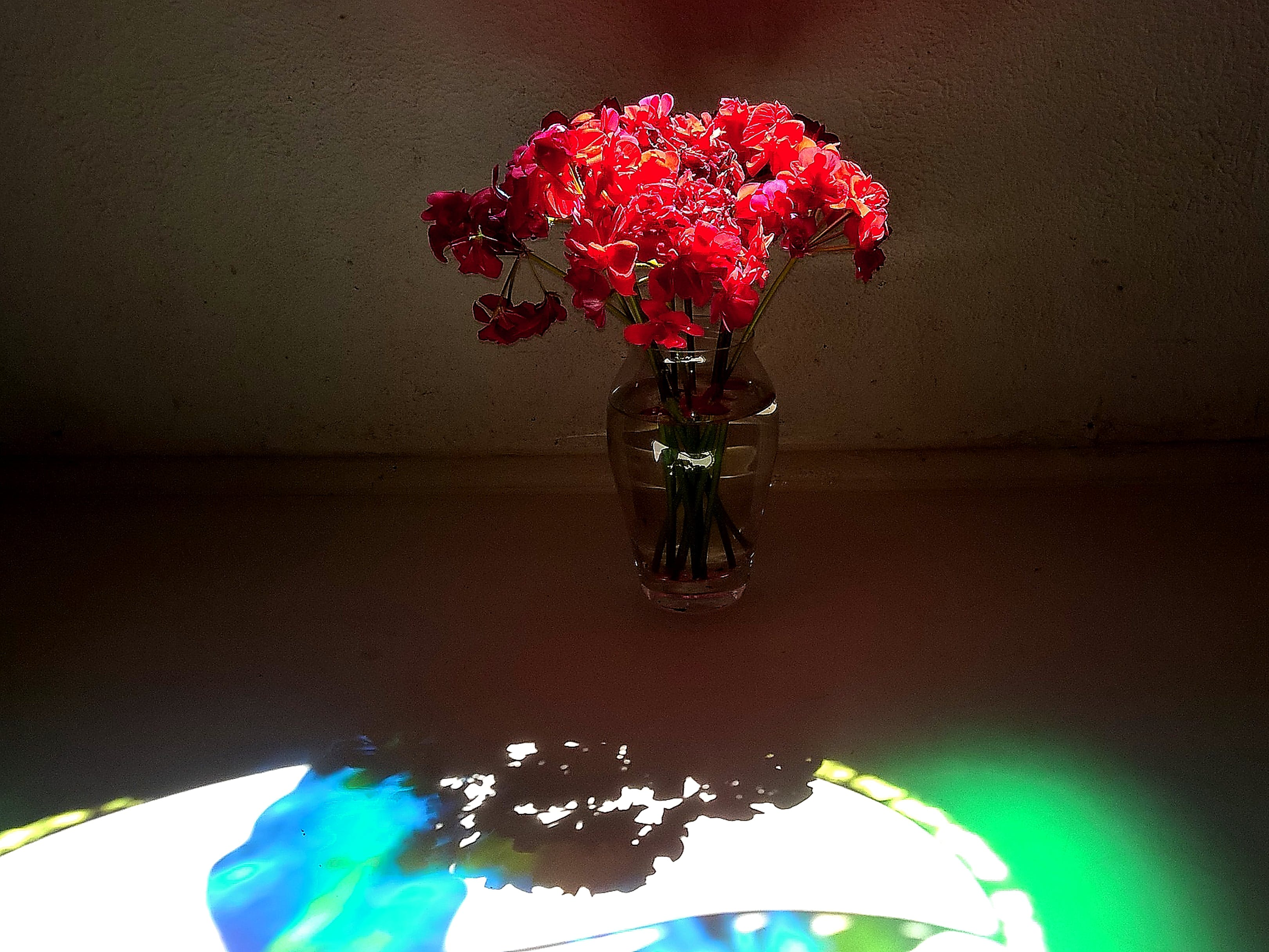 Free stock photo of flowers, light, shadows, vase
