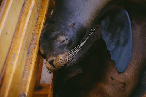 Gratis lagerfoto af dyr, dyreliv, nuttet, pattedyr