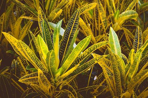 廠, 樹葉, 花園 的 免費圖庫相片