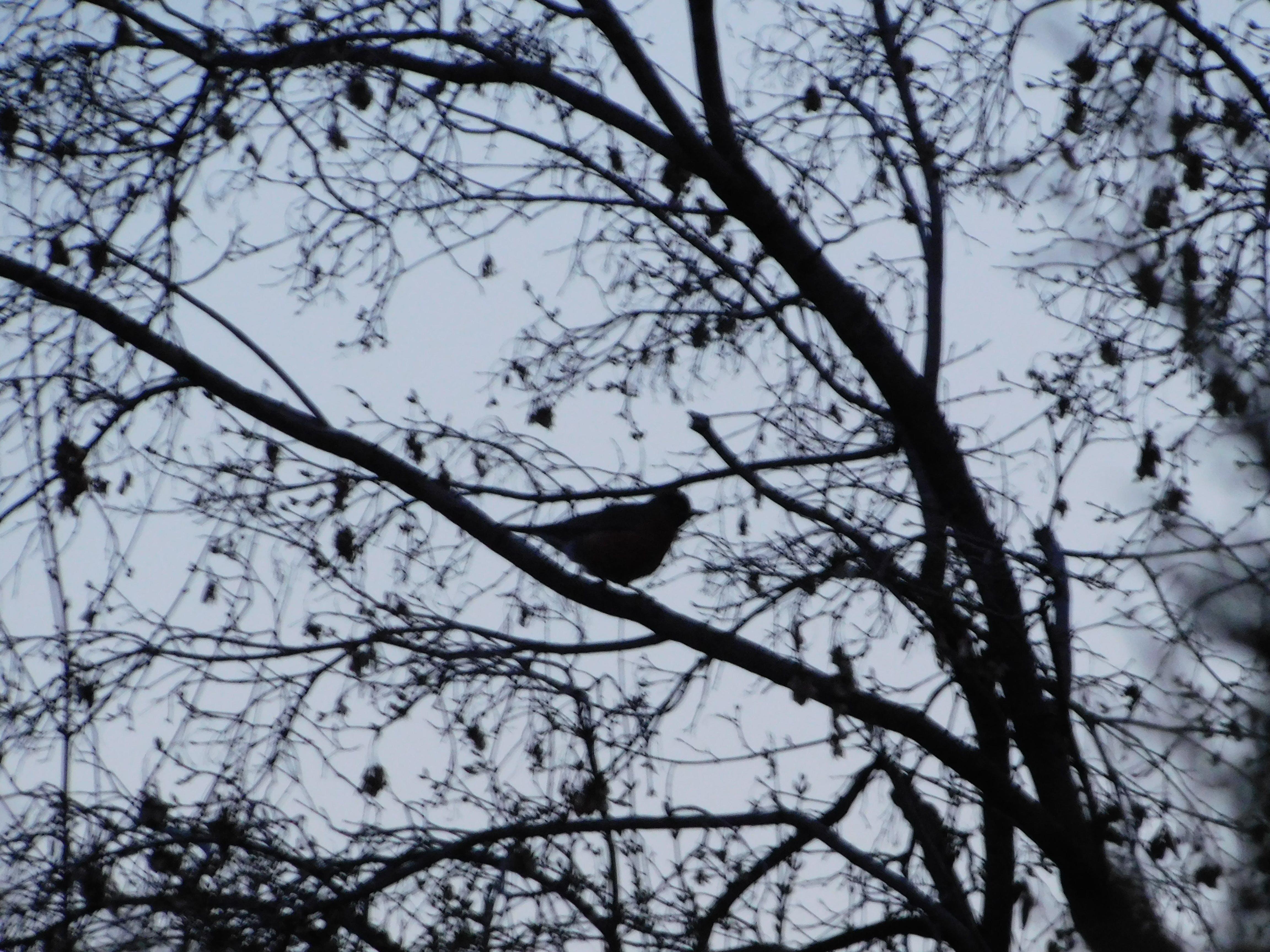 Fotos de stock gratuitas de pájaro nocturno