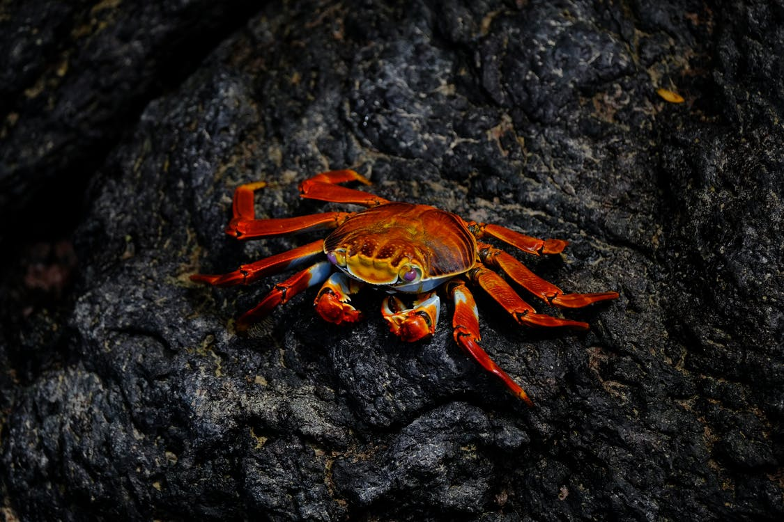 Clasificación-de-los-crustáceos-familia-artrópodos