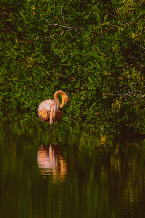 Flamingo On Body Of Water