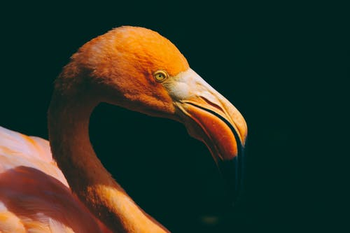 Foto d'estoc gratuïta de animal, au, aviari, bec